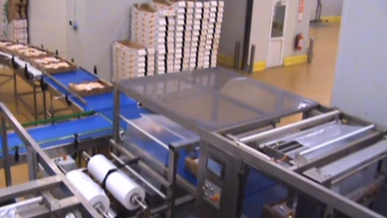 PE Motion, Embalaje Retráctil de Cajas de Pollos Congelados