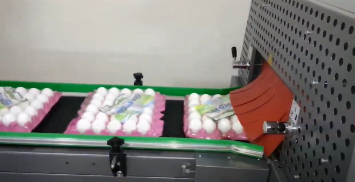 Egg Tray Packaging